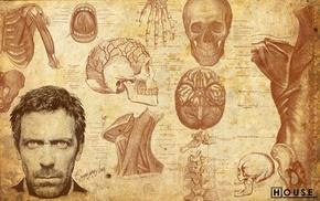 medicine, spine, skull, muscles, face, artwork