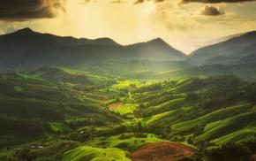 trees, nature, sunrise, mist, green, landscape