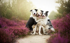 nature, mist, dog, flowers, Friends, pet