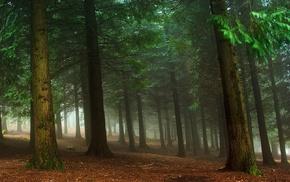 mist, morning, trees, green, nature, landscape