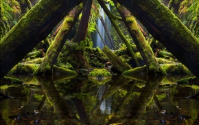 reflection, window, trees, moss, forest, waterfall