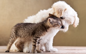 baby animals, cat, kittens, pet, nature, dog