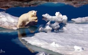 polar bears, jumping, sea, iceberg, snow, water