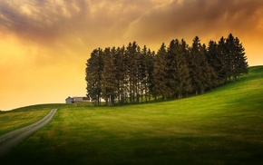 trees, grass, HDR, hill, nature, clouds