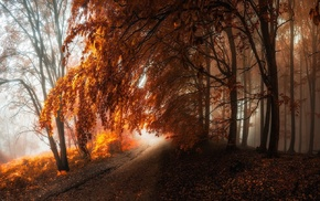 landscape, forest, nature, leaves, trees, fall