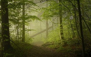 trees, sunlight, green, sunrise, mist, path