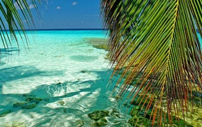 sea, nature, landscape, palm trees, atolls, beach
