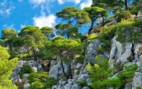 mountain, landscape, shrubs, trees, white, blue