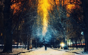 trees, sunset, evening, dead trees, winter, long exposure