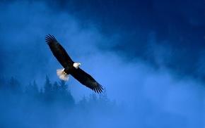 bald eagle, icon