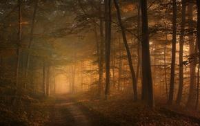 sunlight, sunrise, mist, nature, leaves, forest