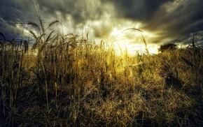clouds, nature, shrubs, bright, sunset, landscape