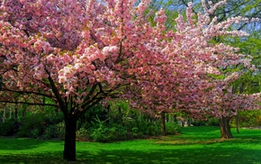 spring, green, nature, cherry blossom, pink, landscape