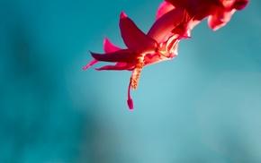 red flowers, simple background, flowers, macro
