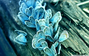 wood, insect, butterfly, macro