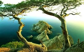 mist, coast, nature, landscape, sea, rock
