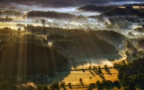 trees, forest, villages, mist, nature, sun rays
