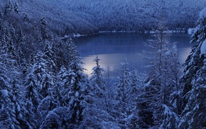 nature, trees, cold, morning, snow, landscape