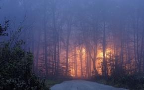 evening, lights, mist, shrubs, landscape, road