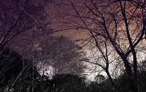 trees, creepy, branch, nature