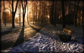 trees, sunlight, snow, bench