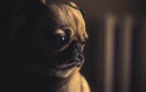brown, emotions, sad, dog, photography, depth of field
