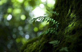 leaves, sunlight, photography, blurred, depth of field, bokeh