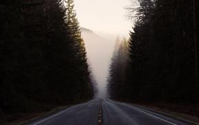 road, trees, landscape, mist, forest, nature