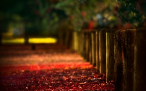 fall, bokeh, path, fence, leaves, depth of field