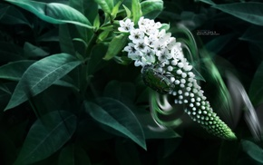 beetles, leaf  bug, photography, white flowers, moonlight, leaves