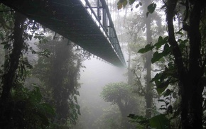 landscape, Costa Rica, forest, trees, bridge, nature