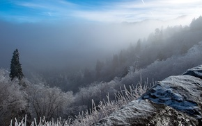 winter, mist, forest, snow, nature, landscape