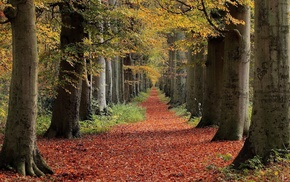 landscape, nature, trees, leaves, path, red