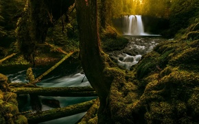 river, ferns, forest, waterfall, nature, Oregon