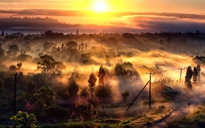 trees, nature, sunrise, sun rays, mist, road