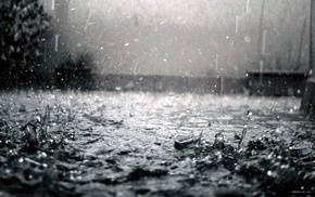 rain, nature