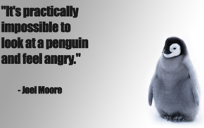penguins, happy, angry, quote