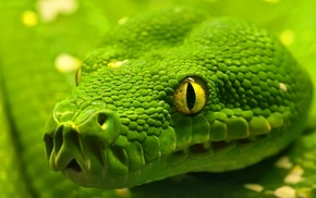 depth of field, nature, green, snake, macro, skin
