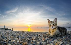 beach, sunset, stones, cat, animals