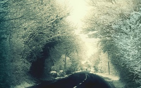 road, winter, landscape, snow