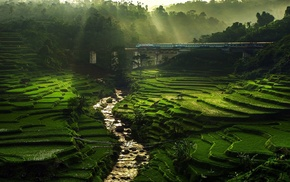 train, bridge, terraces, green, rice paddy, water