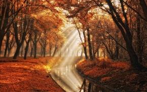 sun rays, mist, park, landscape, trees, fall