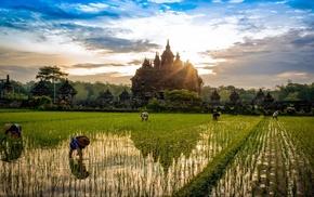 Buddhism, trees, rice paddy, landscape, sunrise, temple