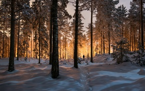 sunrise, sunlight, snow, nature, trees, landscape