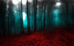 landscape, path, forest, blue, red, nature