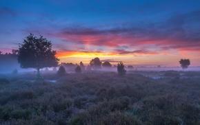 grass, mist, landscape, sunrise, trees, field