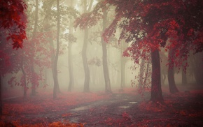 red, path, morning, nature, trees, leaves
