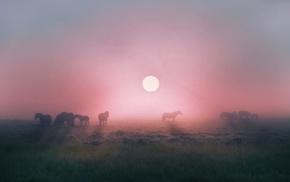horse, field, sunrise, animals, nature, landscape