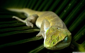 wildlife, macro, leaves, lizards, blurred, sleeping