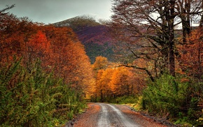 mountain, dirt road, snowy peak, shrubs, fall, landscape